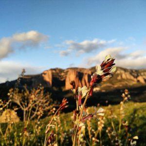 Murillo de Gállego, Spain  #flores #murillodegallego #aragon #igerscatalunya #instanature #nature #casabiescas #MirAragon  Foto gracias a @maggiemiless