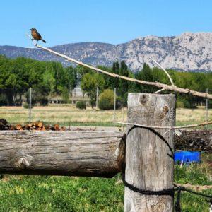 Volando a Peña Palomera  #peñapalomera #sierrapalomera #nikon #santaeulalia #teruel #aragón  Foto gracias a @claradomingo #repost