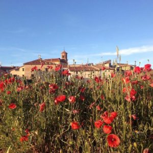 Amapolas sin fin en La Zoma, Aragon. #lazoma #MirAragon #spain #aragon #teruel Foto gracias a @chrisciolli #repost