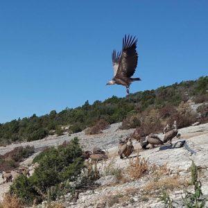 Santa Cilia de Panzano. Buitres leonados. - - - ?? Gracias a @vilardebojoan  por tu preciosa foto y por #repost , os invitamos a visitar su galería. . . · - - ?? Síguenos y etiqueta tus fotos con el hashtag . . . ·@miraragon - - ?? Aragón  #rinconesdelpirineo  #instaordesa  #pirineos #valledetena  #pyrenees  #lovemountains #pirineoaragones  #naturaleza  #nature  #aventure #casabiescas #igersordesa  #miraragon  #igersformigal  #igersvalledetena  #igersguara #desconectar #aragon  #buitre #buitreleonado #amigosdelosbuitres