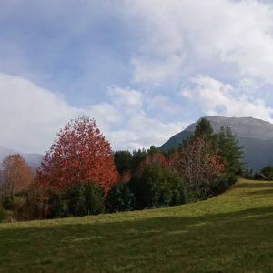 Cerezo otoñal en Pineta. . . ? ? ? ?? Gracias @sestrales por tu preciosa foto y por etiquetarnos os invitamos a visitar su galería. . ? ? ? ?? Síguenos y etiqueta tus fotos con el hashtag @MirAragon . . . · . ? ? ? ?? Pirineos, (Huesca) ? ? ? #rinconesdelpirineo  #instaordesa  #valledetena  #pyrenees  #mountains #pirineos  #pirineoaragones  #casabiescas #montañas #naturaleza  #igersordesa  #miraragon  #igersformigal  #igersvalledetena  #igersguara #paisaje  #amantesdelanaturaleza  #travel  #viajar  #aventuras  #cielo  #alairelibre  #deviaje  #nieve  #Zaragoza  #Aragon  #xperiaxcompact