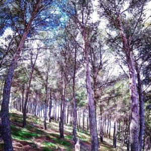 Mañanita de trail????. Sierra de Algairèn. ? ? ? ?? Gracias @pablo_orna por su preciosa foto y por etiquetarnos. Os invitamos a visitar su galería. ? ? ? ?? Síguenos y etiqueta tus fotos con el hashtag @MirAragon . . . · ? ? ? ?? Aragon, Spain ? ? ? #Aragon  #MirAragon  #Aragón  #España  #casabiescas  #viaje  #travel  #arquitectura  #tesorosdearagon #visitspain  #naturaleza  #nature  #tourism  #turismo  #tutismoaragon #photo  #spain  #Rural  #Paisajes #Montañas #Alpartir #sierradealgairen #valdejalon #laalmuniadedoñagodina #Zaragoza #aragon #trailrunning  #spain #instanature
