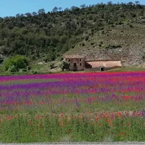Preciosas sorpresas que nos da la primavera. ? ? ? ?? Gracias @currillobolico por tus preciosas fotos y por etiquetarnos. Os invitamos a visitar su galería. ? ? ? ?? Síguenos y etiqueta tus fotos con el hashtag @MirAragon . . . · ? ? ? ? ?? Los Cerezos (Teruel) ? ? ? #loscerezos #Aragón  #teruel #gudarjavalambre  #miraragon  #casabiescas #architecture #primavera #senderismo  #mountains #sierra #rural #montañas #naturaleza  #nature  #travel #adventure #hike #capture #paisaje  #trekking  #Instagood  #photo #aragon #españa #spain #flowers #hiking #trip #viaje