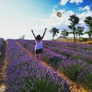 Las flores de espliego en todo su esplendor. ? ? ? ?? Gracias @esmonclus por tus preciosas fotos y por etiquetarnos. Os invitamos a visitar su galería. ? ? ? ?? Síguenos y etiqueta tus fotos con el hashtag @MirAragon . . . · ? ? ? ? ?? Teruel ? ? ? #Aragón  #teruel #lavanda #miraragon  #casabiescas #lavender #verano #senderismo  #mountains #sierra #rural #montañas #naturaleza  #nature  #travel #adventure #hike #capture #paisaje  #trekking  #Instagood  #photo #aragon #españa #spain #flowers #hiking #trip #viaje #summer