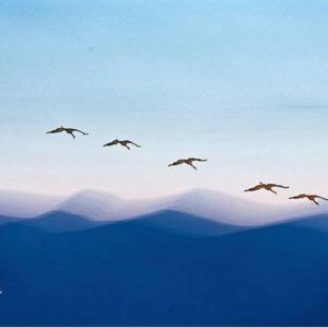 Alrededor de 17.000 grullas habitan en estos momentos la laguna de Gallocanta. Gran momento para los amantes de la ornitología y el bird watching. ? ? ? ?? Gracias @patxiestables por su preciosa foto y por este #repost Os invitamos a visitar su galería. ? ? ? ?? Síguenos y etiqueta tus fotos con el hashtag @MirAragon . . . · ? ? ? ?? Gallocanta (Zaragoza) ? ? #gallocanta  #aragon  #Zaragoza  #miraragon  #Aragón  #España  #casabiescas #grulla #birdwatching  #crane  #viaje #travel #trip #autumn #mountains #visitspain #wanderlust #photography #hike #naturaleza #instagood #nature #sky #animal  #tourism #turismo #clouds  #spain #capture