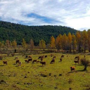 ¿Los prados de Escocia? ¡No! La Sierra de Gúdar en la provincia de Teruel. ? ? ? ?? Gracias @elenitadoso por tus preciosas fotos y por etiquetarnos. Os invitamos a visitar su galería. ? ? ? ?? Síguenos y etiqueta tus fotos con el hashtag @MirAragon . . . · ? ? ? ? ?? Sierra de Gúdar (Teruel) ? ? ? #Aragón  #teruel #corbalan  #miraragon  #casabiescas #town #sierradegudar #senderismo  #mountains #rural  #sierra #naturaleza  #nature  #travel #autumn  #adventure #hike #capture #paisaje  #trekking  #Instagood  #photo #aragon #españa #spain #pueblo #hiking #trip #viaje #meadow