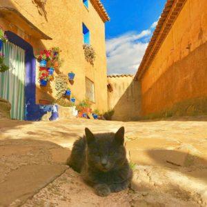 Los gatos son individuos soberanos, con sus propias ideas sobre todas las cosas.....y eso incluye a las personas de su posesión ???? - J Dingman ??: @carmenchurt . . ?? Anento (Zaragoza) . . #MirAragon  #zaragoza #aragon #aragón #españa #spain #lospueblosmbe #españagrafias  #followme  #landscape #landscapelovers  #casabiescas  #arquitectura  #wonderful_places  #worldcaptures #town  #travelphotograph #photographer #photography  #capture #paisaje  #anento #gatos #cat #zaragozaturismo #pueblosbonitos #turismoaragon #turismorural #turismoaragon