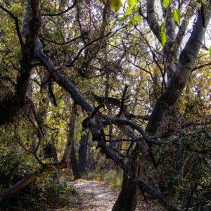 Frondosa selva parece la ribera de El Ebro. ? ? ?? Gracias @carmenlaz64 por su preciosa foto y por etiquetarnos. Os invitamos a visitar su galería. ? ? ? ?? Síguenos y etiqueta tus fotos con el hashtag @MirAragon . . . · ? ? ? ?? Zaragoza ? ? #aragon  #Zaragoza  #miraragon  #Aragón  #España  #casabiescas  #ebro #river #wood #viaje #travel #trip #bosque #tree #naturaleza #tesorosdearagon #visitspain #wanderlust #photography #hike #trekking #senderismo #nature #streetphotography #instagood #tourism #turismo #walk  #spain #capture