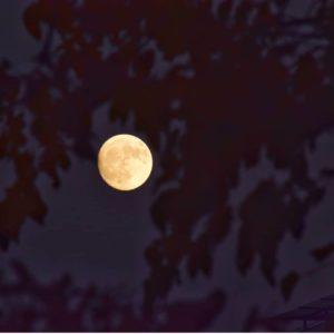 Preciosa luna llena ayer sobre el cielo zaragozano. ? ? ?? Gracias @marjeche por su preciosa foto y por etiquetarnos. Os invitamos a visitar su galería. ? ? ? ?? Síguenos y etiqueta tus fotos con el hashtag @MirAragon . . . · ? ? ? ?? Zaragoza ? ? #aragon  #Zaragoza  #miraragon  #Aragón  #España  #casabiescas  #luna #moon #cielo #viaje #travel #trip #sky #tree #naturaleza #tesorosdearagon #visitspain #wanderlust #photography #hike #trekking #senderismo #nature #streetphotography #instagood #tourism #turismo #walk  #spain #capture